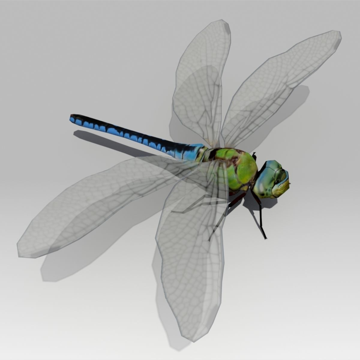 Model Dragonflies at Cheney: Natural History and Art Trail